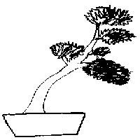 bonsai_style_arbre_battu_par_les_vents
