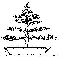 bonsai_style_droit