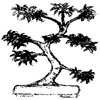 bonsai_style_droit_informel