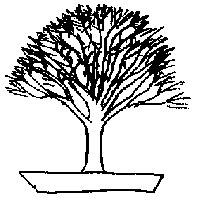 bonsai_style_en_balais