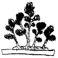bonsai_style_en_radeau