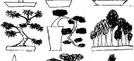 bonsai_style_et_forme