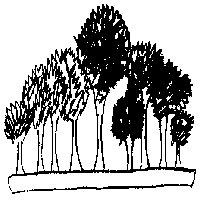 bonsai_style_foret