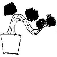 bonsai_style_semi-cascade