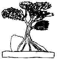 bonsai_style_sur_roche