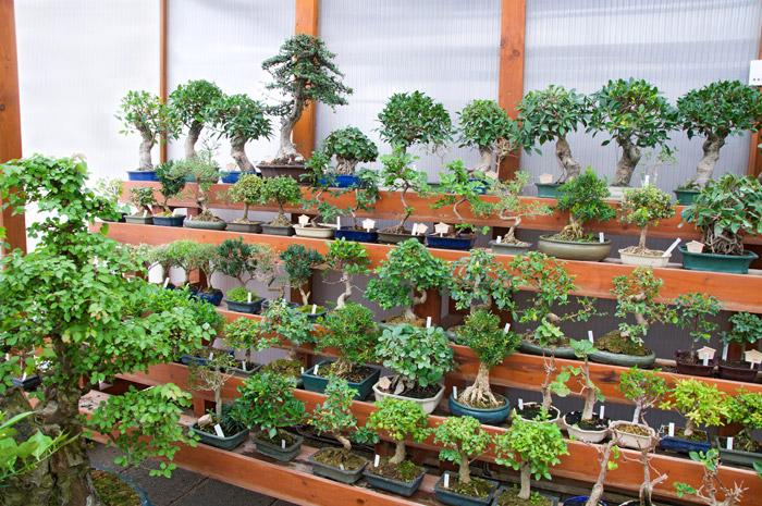 Où acheter un bonsai en Belgique ? Liste des pépinières belges
