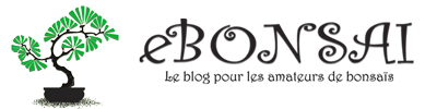 eBonsai.be – Blog pour les amateurs et passionnés de Bonsaïs