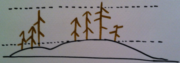 bonsai-meleze-foret-disposition-arbre--ebonsai-blog