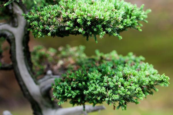 La fertilisation par les feuilles