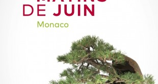 expo-bonsai-les-jolis-matin-de-juin-2017