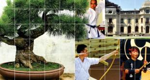 salon-du-bonsai-mai-2017-enghien